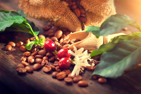 Coffee beans, coffee flowers and leaves on wooden table