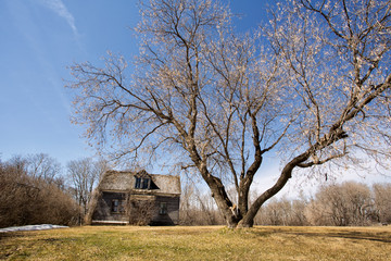 An old two storey abandoned house weathered to gray wood surrounded by bare trees in a spring countryside landscape