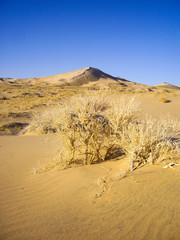 Sand dunes of the Mojave Desert