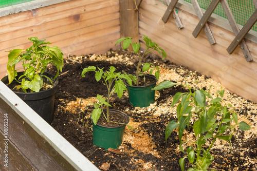 Gartenarbeit Im Hochbeet Mit Tomaten Chili Im Fruhjahr Garten