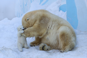 Polar bear with cub.