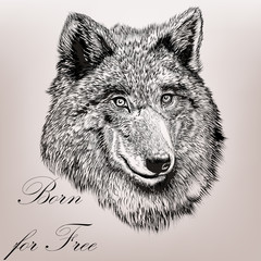 Beautiful high detailed hand draw wolf realisic vector in engrav