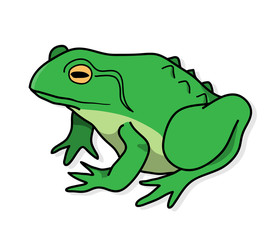 Frog, a hand drawn vector illustration of a frog with shadow backdrop.