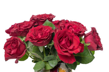 red Roses / red roses over a bright background