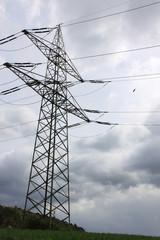 Krähe umfliegt Strommast