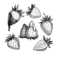 Hand-drawn illustration. Collection of strawberry. Line art. Iso