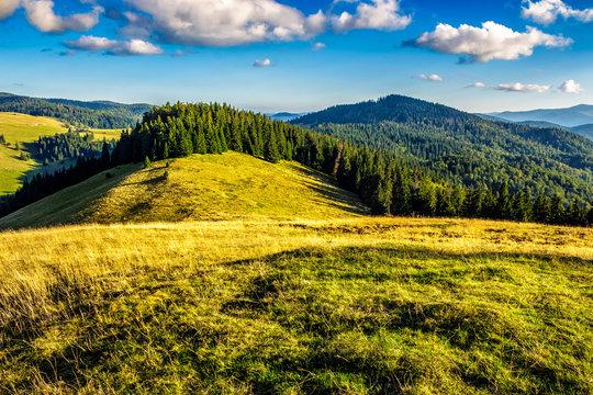 meadow on a hillside near forest