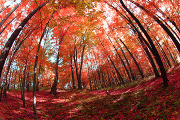 Recess Fitting Magenta color autumn forest