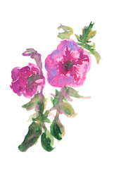 petunia watercolor painting isolated