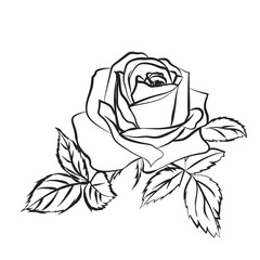 Rose sketch on white background.