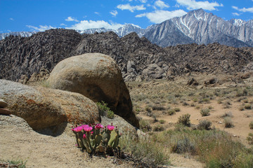 Spring at Alabama Hills