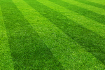 Football field stadium background