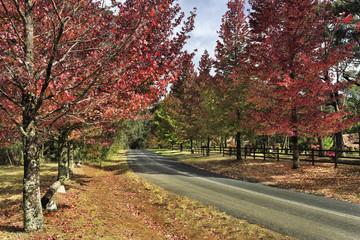 BM Mt Wilson road red trees