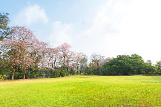 Green park landscape