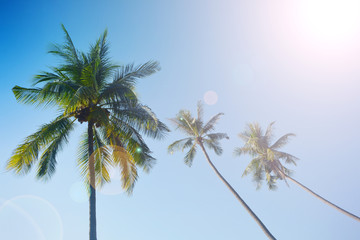 coconut tree and blue sky nature  background