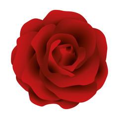 Illustration Vector Graphic Flower Rose