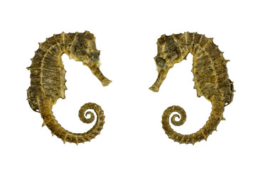 Seahorse over white background
