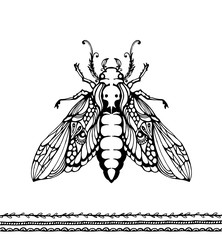 Insect vector illustration