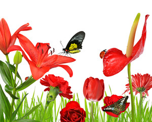 Red flowers with butterflies and ladybug isolated on white background