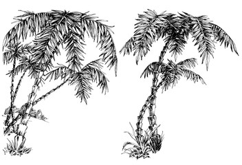Palm trees isolated