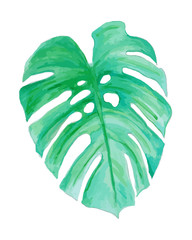Watercolor drawing, palm trees or green leaves