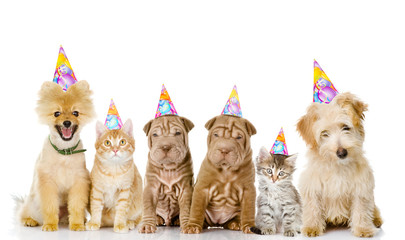 Group of cats and dogs with birthday hats. isolated on white bac