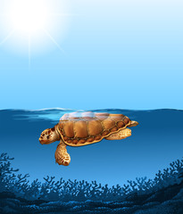 Turtle swimming under the ocean