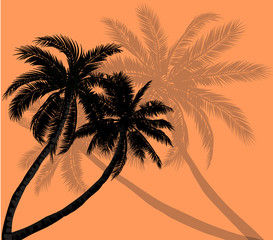 Vector palm trees with silhouettes of leaves