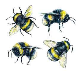Set of bumblebees on a white background. Watercolor drawing. Insects drawing