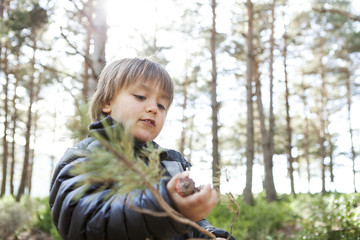 Portrait of little boy playing with conifer branch in the woods