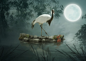 Demoiselle Crane standing on the stone in the water under the trees in the moonlight