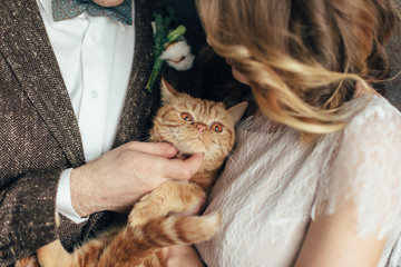 Big british orange cat in hands of wedding couple. modern look of groom and bride. lifestyle photo