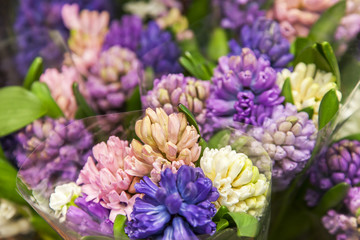 Multi-colored hyacinths in flower shop