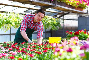 Gärtner im Blumenhandel kümmert sich um die Balkonpflanzen // friendly gardener