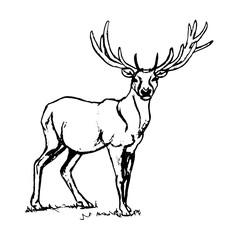 Deer with big horns.