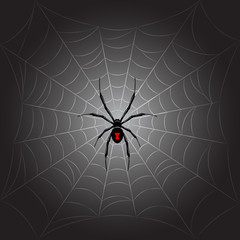 Black spider on web.Vector background.