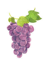 grape illustration isolated on white background