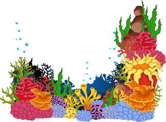 beauty coral background