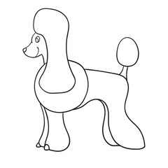 Contour poodle isolated on white background