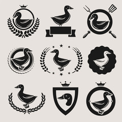 duck labels and elements set. Vector