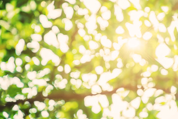 Abstract green Bokeh background with sunlight