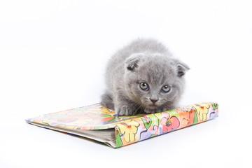 Gray kitten Scottish Fold and magazine (isolated on white)