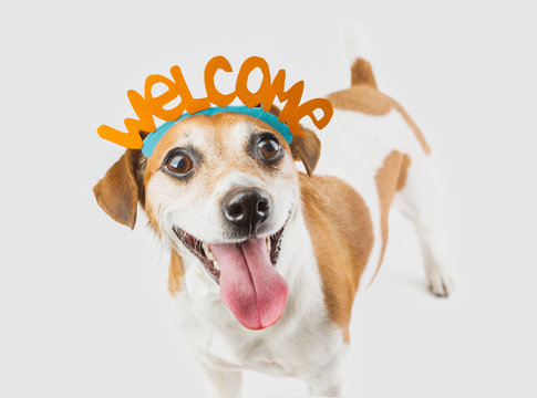 Adorable cute small smiling dog with Welcome word on the head. Gray background. Welcoming pet muzzle