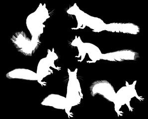 six small black squirrels on black