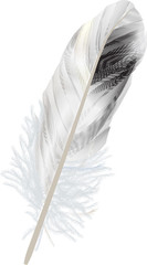isolated black and white feather illustration