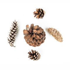 Set of various tree cones isolated on white background.