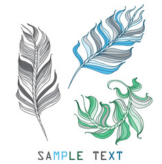 feathers different color on a white background hand drawn vector illustration