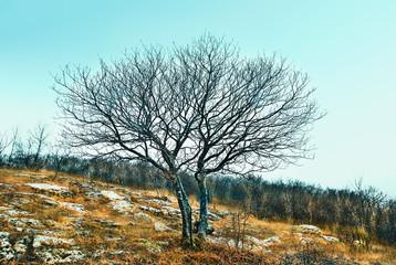 Cold landscape in Dobrogea Gorge Reserve, Romania