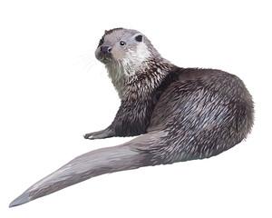 Realistic otter