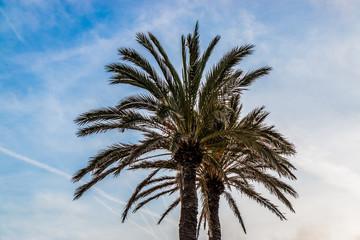 Les palmiers sur le bord de mer